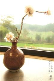 Copyright: Blossoms in Vase, SteveNakatani