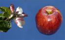 Copyright: Jan Smith - Blossom to apple